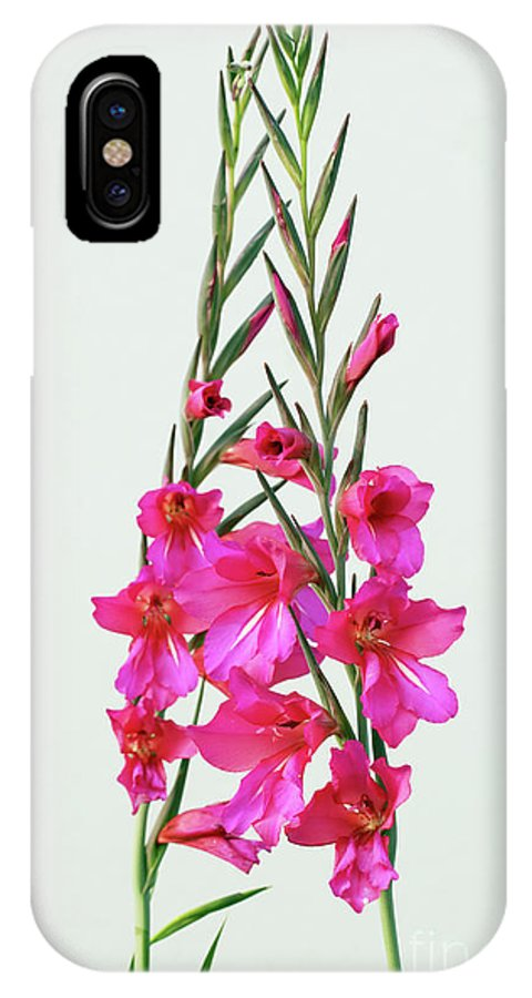 Flower IPhone X Case featuring the photograph Gladioli Byzantinus In Love by Terri Waters