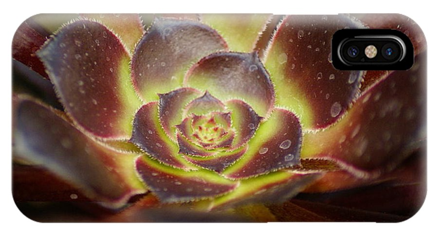 Flowers IPhone X Case featuring the photograph Glistening Glowing Garden Jewel by Ben Upham III