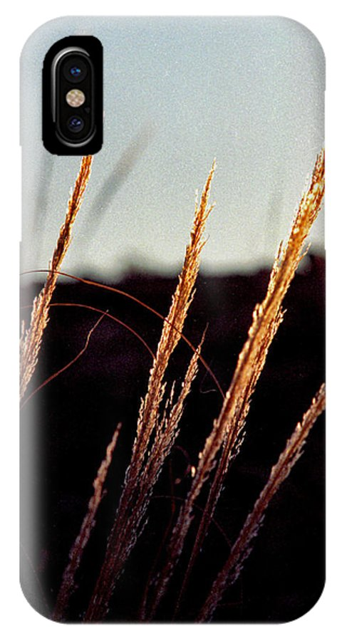 Grass IPhone Case featuring the photograph Glistening Grass by Randy Oberg