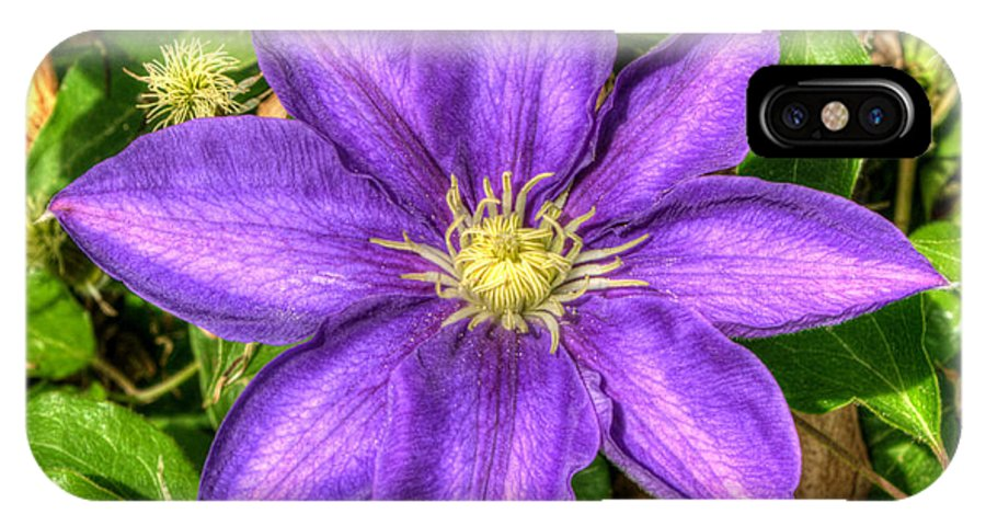 Clematis IPhone X Case featuring the photograph Glorious Glowing Clematis by Douglas Barnett