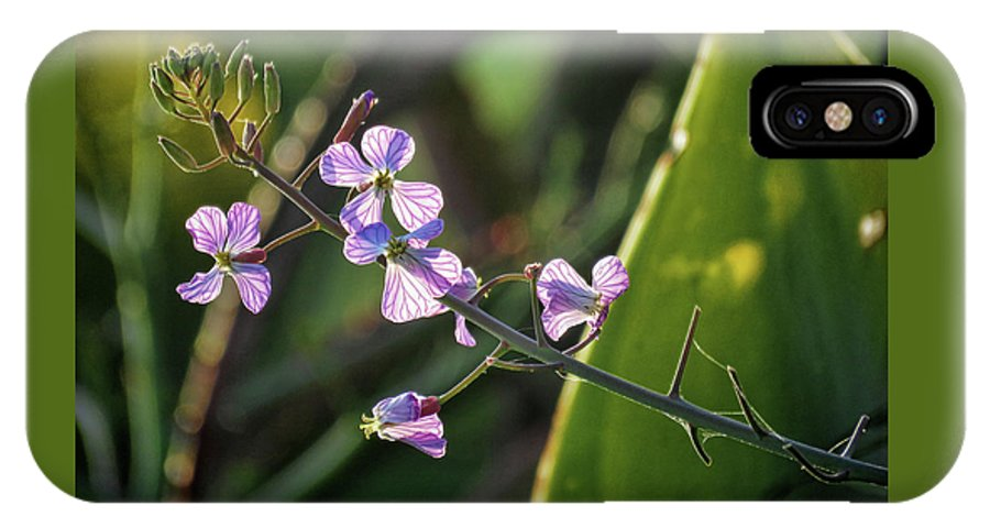 Flowers IPhone X Case featuring the photograph Glowing Pink by Helaine Cummins