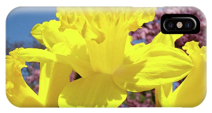 Daffodils IPhone X Case featuring the photograph Glowing Yellow Daffodils Art Prints Pink Blossoms Spring Baslee Troutman by Baslee Troutman