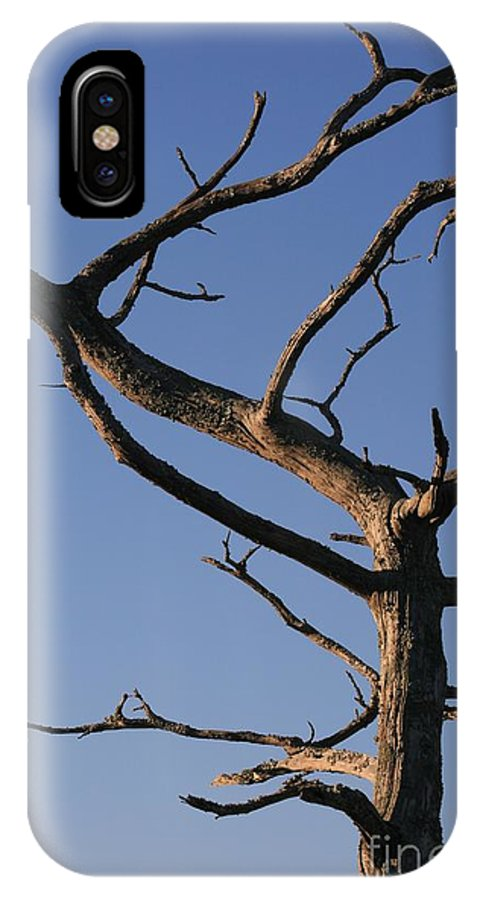 Tree IPhone Case featuring the photograph Gnarly Tree by Nadine Rippelmeyer