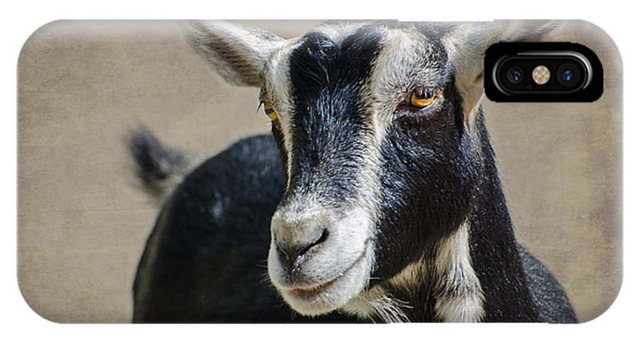 Goat IPhone X Case featuring the photograph Goat 2 by Susan McMenamin