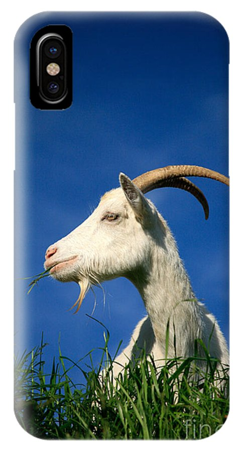 Animals IPhone X Case featuring the photograph Goat by Gaspar Avila