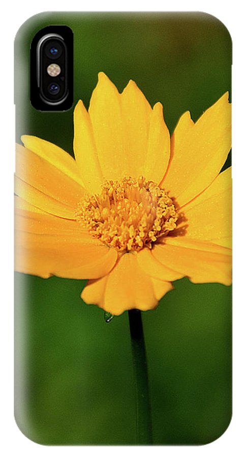 Ann Keisling IPhone X Case featuring the photograph Gold In The Garden by Ann Keisling