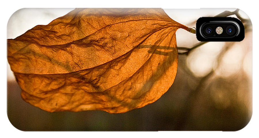 Golden IPhone X Case featuring the photograph Golden Briar Leaf by Douglas Barnett