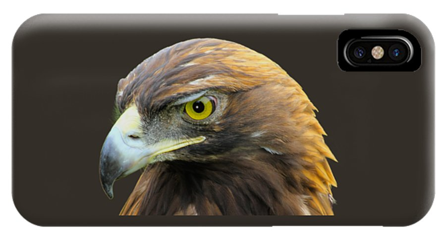Golden Eagle IPhone X Case featuring the photograph Golden Eagle by Shane Bechler