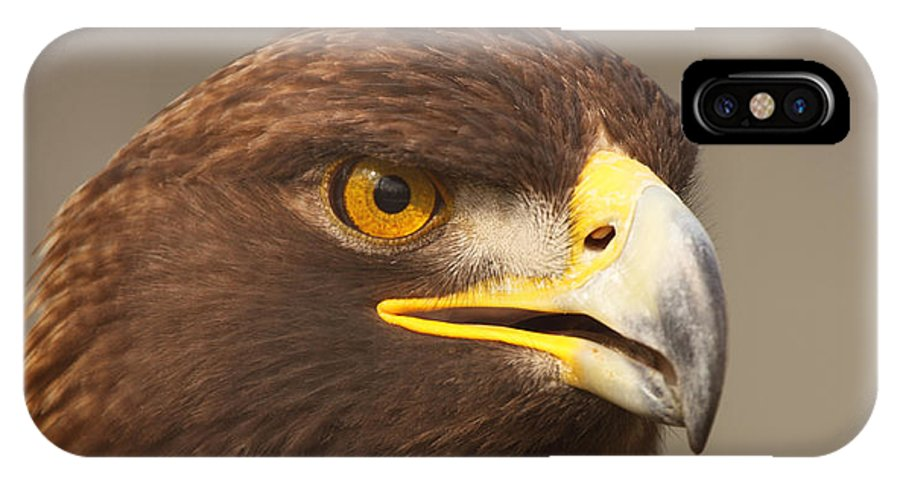 Behavior IPhone X Case featuring the photograph Golden Eagle Softly Calling by Max Allen