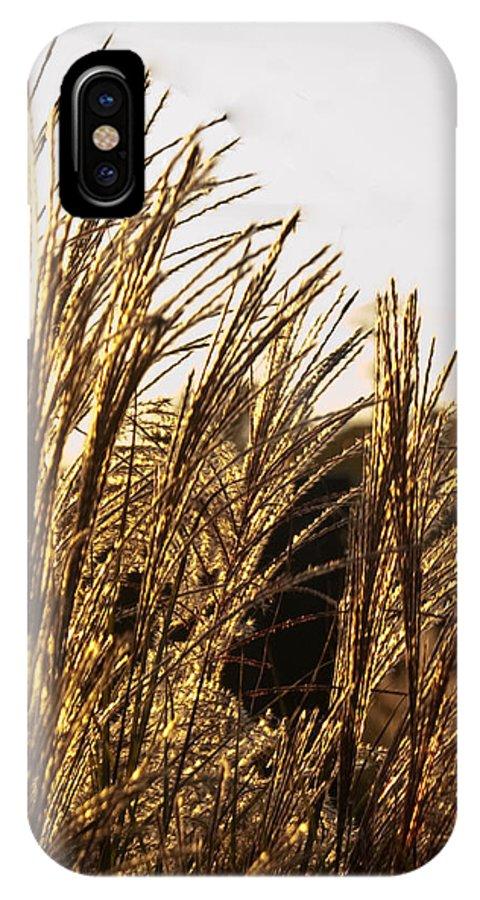 Golden IPhone X Case featuring the photograph Golden Grass Flowers by Douglas Barnett