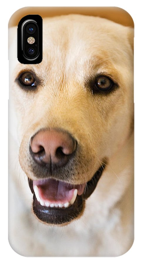 Lab IPhone X Case featuring the photograph Golden Lab by Marilyn Hunt
