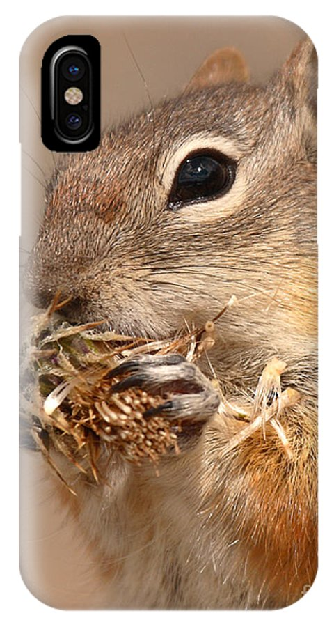 Golden-mantled Ground Squirrel IPhone X Case featuring the photograph Golden-mantled Ground Squirrel Nibbling On A Bite by Max Allen