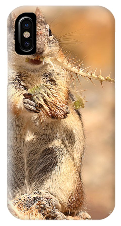 Golden-mantled Ground Squirrel IPhone X Case featuring the photograph Golden-mantled Ground Squirrel With A Prickly Bite by Max Allen