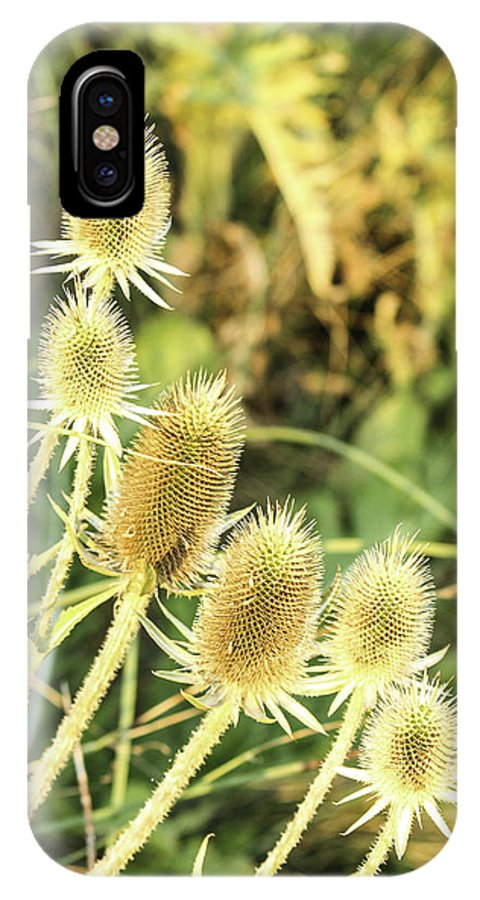 Thistles IPhone X Case featuring the photograph Golden Thistles Sextet by Lorraine Baum