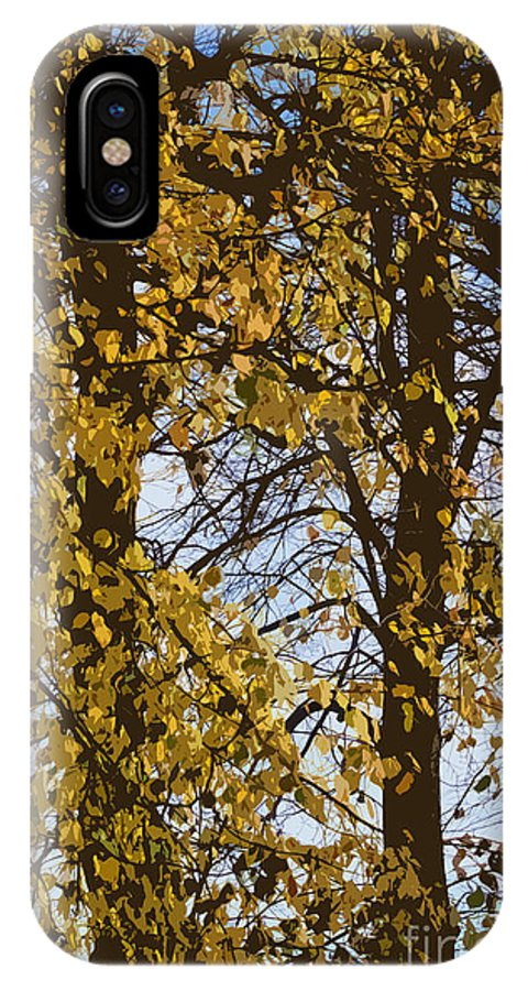 Autumn IPhone X Case featuring the photograph Golden Tree 2 by Carol Lynch