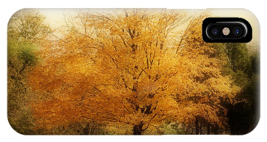 Landscape IPhone X Case featuring the photograph Golden Tree by Sandy Keeton