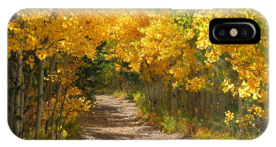 Fall Autumn Walk Path Hike Aspen Rocky Mountains Goldhill Sunny IPhone X Case featuring the photograph Golden Tunnel by George Tuffy