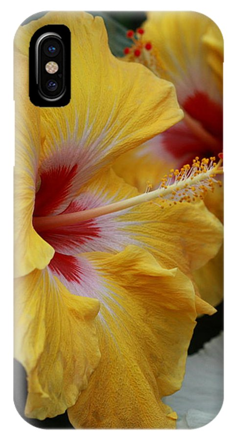 Flower IPhone X Case featuring the photograph Golden Twins by Paul Slebodnick