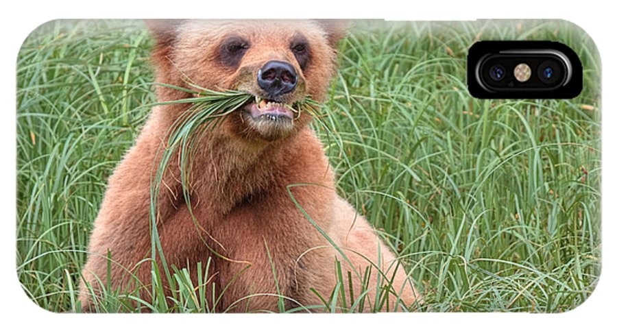 Khutzymateen Grizzly Bear Sanctuary IPhone X / XS Case featuring the photograph Good Stuff by James Anderson