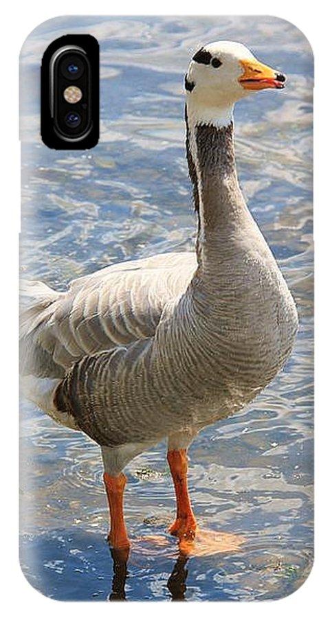 Birds IPhone X Case featuring the photograph Goosey Goosey Gander... by Martina Fagan