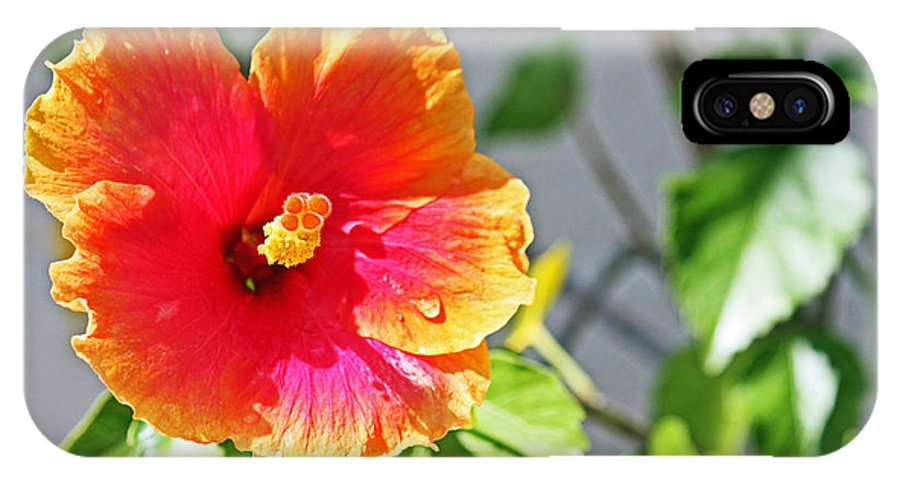 Flower IPhone X Case featuring the photograph Gorgeous Hibiscus by Terri Mills