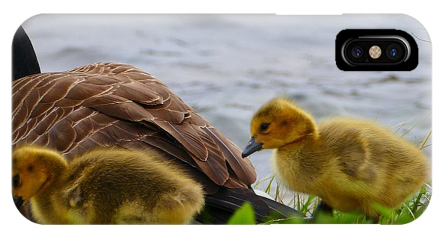 Goslings IPhone X / XS Case featuring the photograph Gosling Gaggle 1 by Debbie Storie