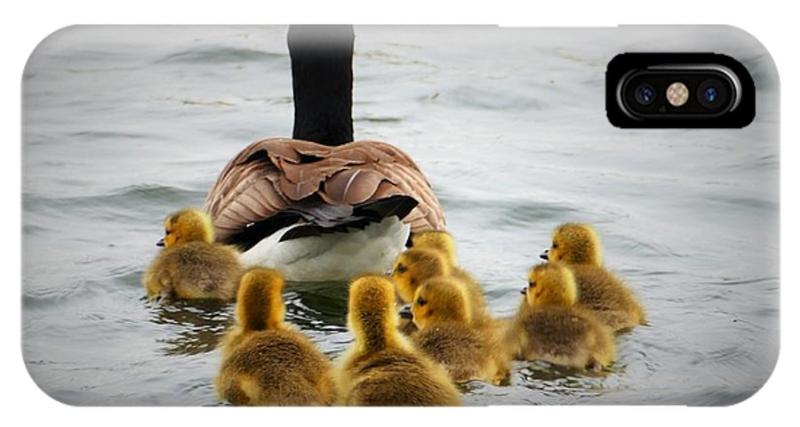 Goslings IPhone X / XS Case featuring the photograph Gosling Gaggle 3 by Debbie Storie