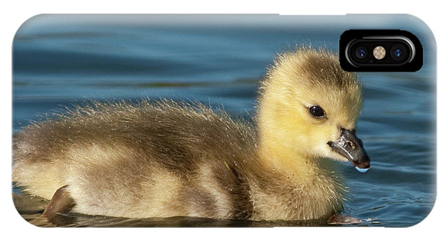 Festblues IPhone X Case featuring the photograph Gosling.. by Nina Stavlund
