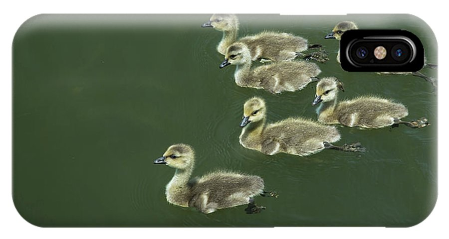 Goose IPhone X Case featuring the photograph Goslings by Greg Thiemeyer