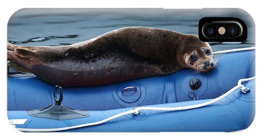 Harbor Seal IPhone X Case featuring the photograph Got Salmon by Sharon Talson