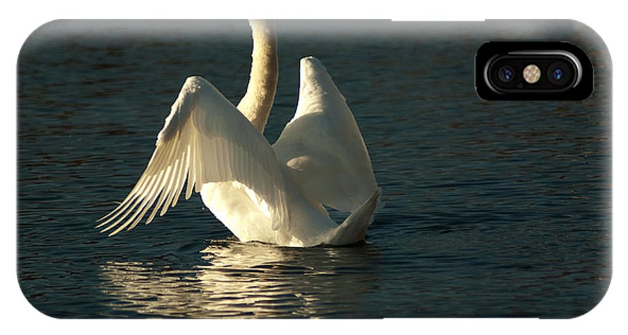 Swan IPhone X Case featuring the photograph Grace And Elegance by Sheila McDowell