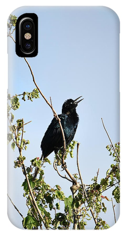 Grackle Cackle IPhone X Case featuring the photograph Grackle Cackle by William Tasker
