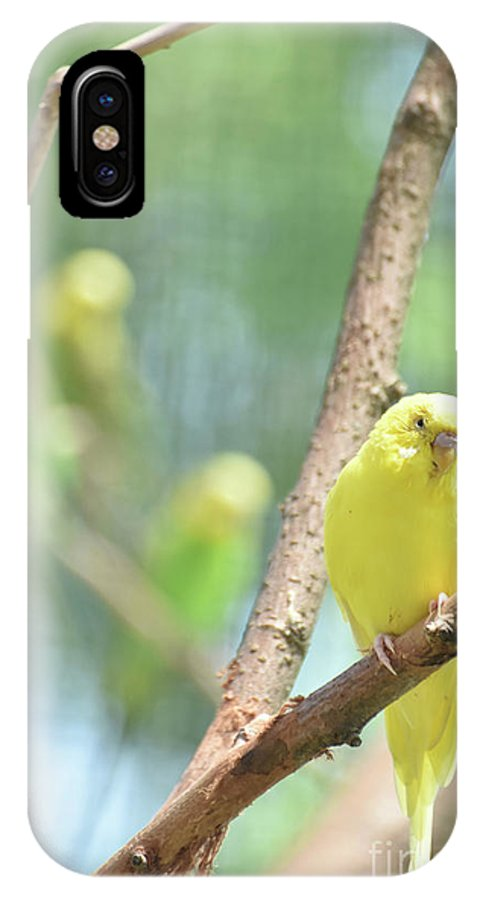 Budgie IPhone X Case featuring the photograph Grand Close Up Of An Adorable Yellow Parakeet by DejaVu Designs