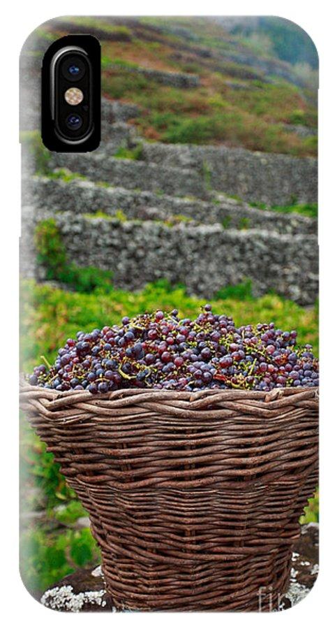 Basket IPhone X Case featuring the photograph Grape Harvest by Gaspar Avila