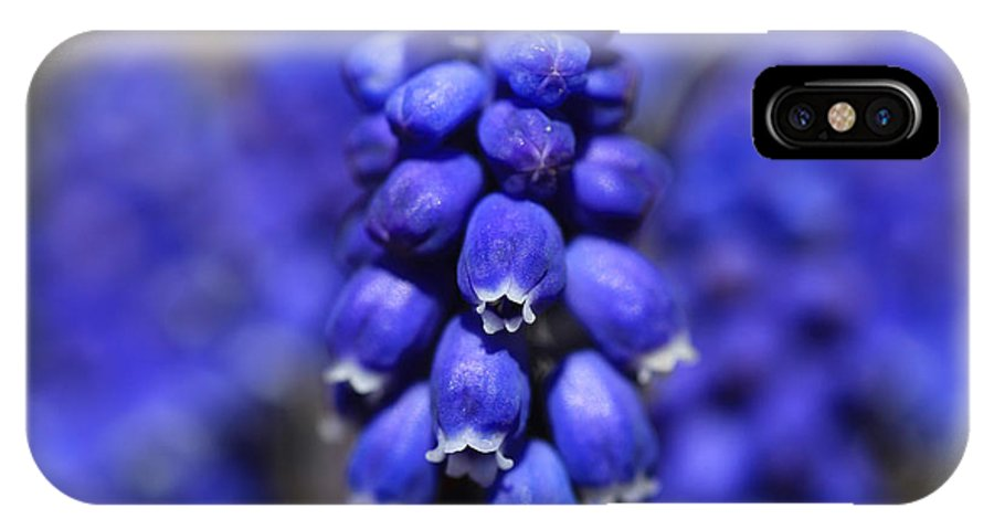 Grape Hyacinth IPhone X Case featuring the photograph Grape Hyacinth - Muscari by Donna Kennedy