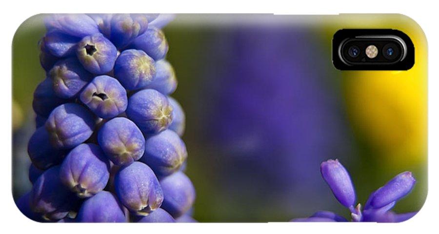 Purple Flowers IPhone X Case featuring the photograph Grape Hyacinth by Sven Brogren