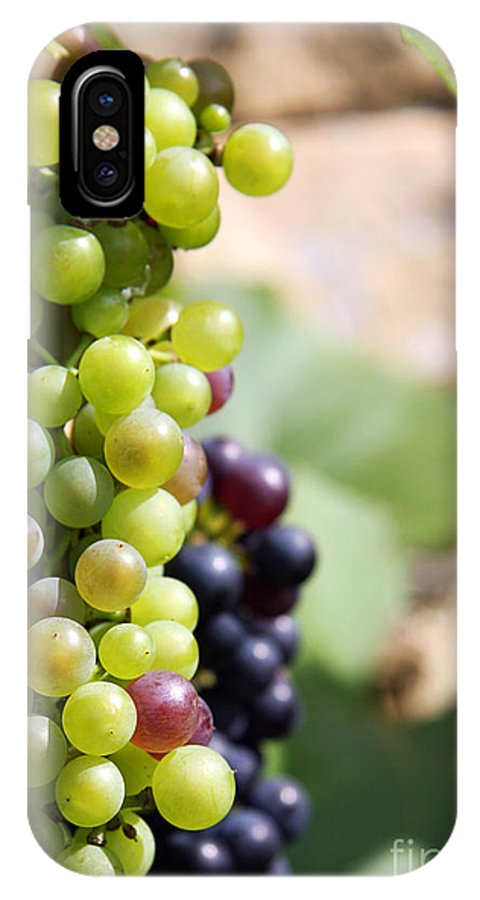 Agricultural IPhone X Case featuring the photograph Grapes by Jane Rix