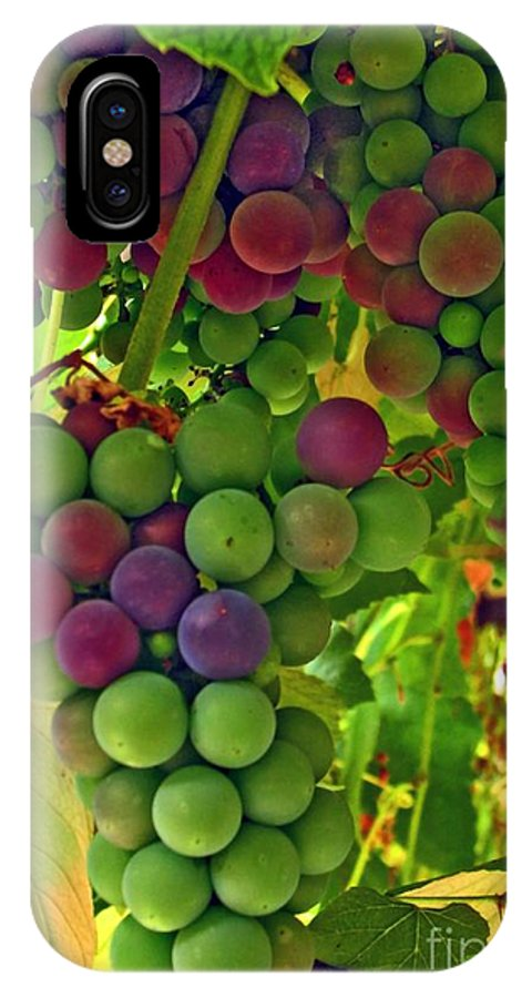 Grapes IPhone X Case featuring the photograph Grapes On The Vine by Chris Anderson