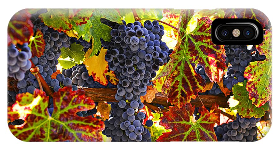 Grapes IPhone X Case featuring the photograph Grapes On Vine In Vineyards by Garry Gay