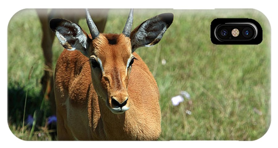 Deer IPhone X Case featuring the photograph Grassland Deer by Aidan Moran