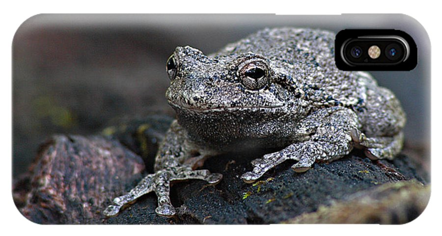 Frog IPhone Case featuring the photograph Gray Treefrog On A Log by Max Allen