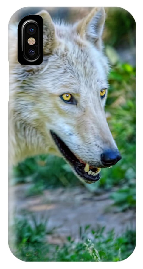 Wolf IPhone X Case featuring the photograph Gray Wolf by LeeAnn McLaneGoetz McLaneGoetzStudioLLCcom