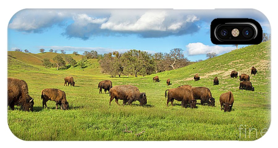 Buffalo IPhone X Case featuring the photograph Grazing Buffalo by Mimi Ditchie