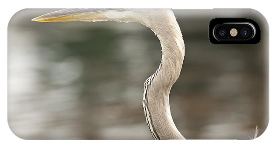 Great Blue Heron IPhone X Case featuring the photograph Great Blue Heron by Anthony Towers