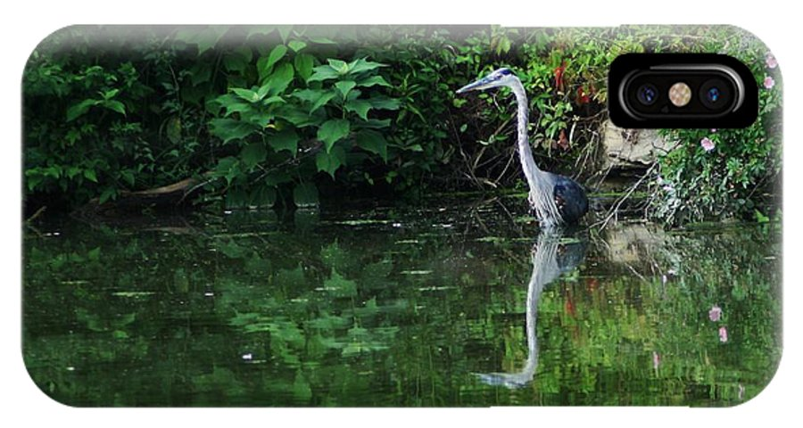Lanscape Water Bird Crane Heron Blue Green Flowers Great Photograph IPhone X Case featuring the photograph Great Blue Heron Hunting Fish by Dawn Downour