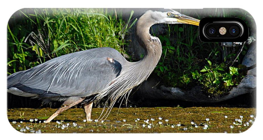 Great Blue Heron IPhone X Case featuring the photograph Great Blue Heron by Larry Ricker