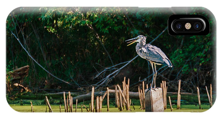 Great Blue Heron IPhone X Case featuring the photograph Great Blue Heron Mouth by Edward Peterson