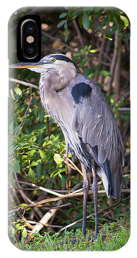 Great Blue Just Chillin IPhone X Case featuring the photograph Great Blue Just Chillin' by William Tasker