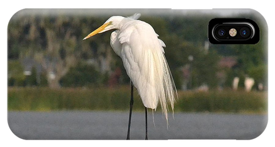 Egret IPhone X Case featuring the photograph Great Egret by Carol Bradley