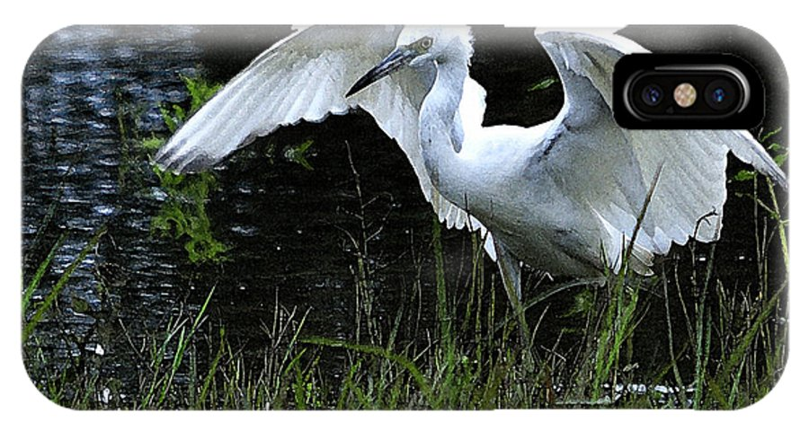 Roy Williams IPhone X Case featuring the photograph Great Egret Hunting by Roy Williams